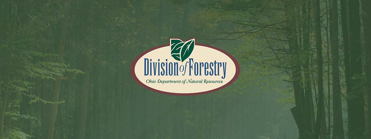 Contact the Division of Forestry